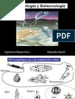 III Microorganismos