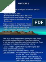 ANATOMI 2