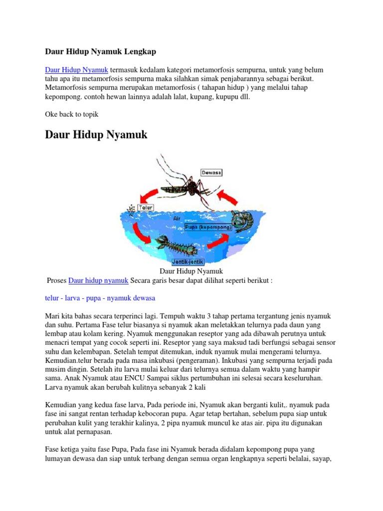 5500 Gambar Siklus Hewan Nyamuk HD