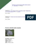 VERONÍCĂ (2)