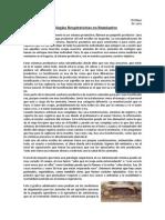 2. Patologías Respiratorias en Rumiantes (1)