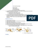costillas.pdf