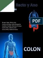 Cirugia - Anatomia de Colon Recto y Ano