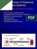 Pathogenesis of Peripheral Nerve Disorder