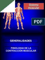 El Sistema Muscular (2).pps