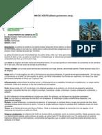 Ficha Técnica Palma.docx