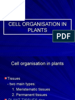 2.4 Cell Organisation in Plants