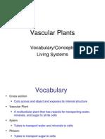 Vascular Plants Vocabulary