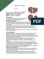 HARPAGOFITO Harpagophytum procumbens