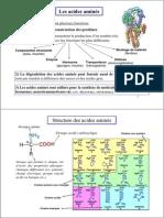acides amines