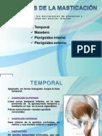 musculosdelamasticacin-101108184452-phpapp02