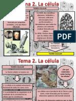 Tema 2 Celula