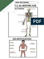 Estudiar els ossos i articulacions