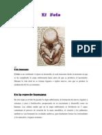 El  feto.docx