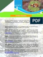 lexique forestier