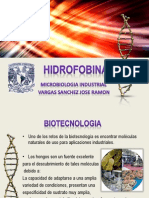 Presentación hidrofobinas.pptx