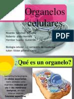 organelos-121130005513-phpapp02 (1).pptx