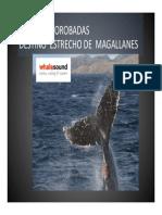 Ballenas Jorobadas. Destino Estrecho de Magallanes