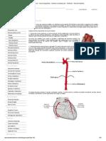 Sistema Arterial - Vasos Sangüíneos - Sistema Cardiovascular - Sistemas - Aula de Anatomia.pdf