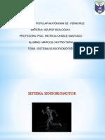 1 Sistema Sensorio Motor
