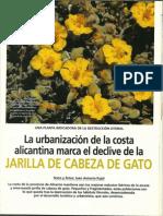 La urbanización de la costa alicantina, marca el declive de la Jarilla de cabeza de gato (Helianthemum caput-felis)