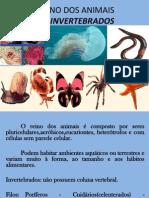 porferosecelenterados-2011-110803092903-phpapp01