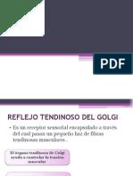 Laboratorio Fisiologia Reflejo Tendinoso Del Golgi