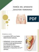 01 - Aparato reproductor femenino