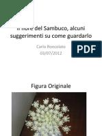 Il Fiore Del Sambuco (1)