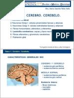 T01 Cerebro Cerebelo