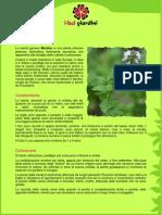 Menta.pdf
