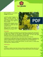 Mimosa.pdf