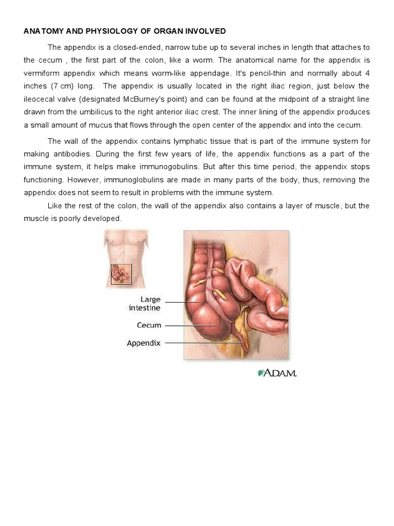 Anaphy and Patho of Appendicitis | Inflammation | Anatomy