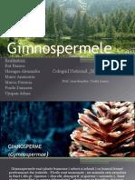 gimnosperme