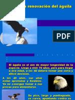 La renovación del águila