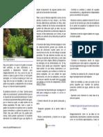 8585055-plantas-en-el-acuario.pdf
