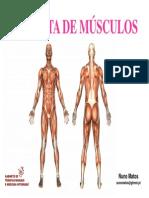 musculos do pé