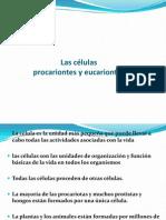 Células procariontes y eucariontes 3