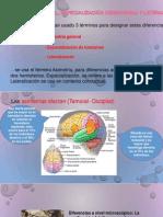 ASIMETRIA CEREBRAL, ESPECIALIZACIÓN HEMISFERICA Y LATERALIZACIÓN (1)
