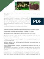 Ar Boles PDF
