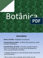 Agrofloresta 2013 Botânica Doors