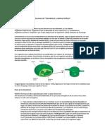 Resumen de fotosíntesis y tramas alimentarias