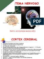 Aula 5- Cortex Cerebral