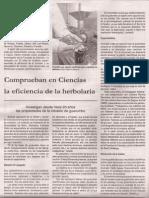 Guarumbo Herbolaria Diabetes