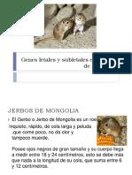 Genes Letales y Subletales en Jerbos de Mongolia