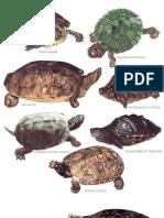 Longmans Encyclopedia Reptiles