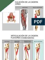 Tema 8 Musculos de La Cadera