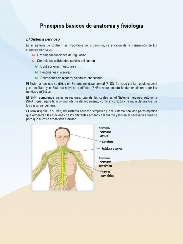 Principios Basicos de Anatomia y Fisiologia