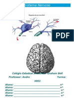 Sistema Nervos Principal