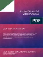 ACLIMATACIÓN DE VITROPLANTAS (5)
